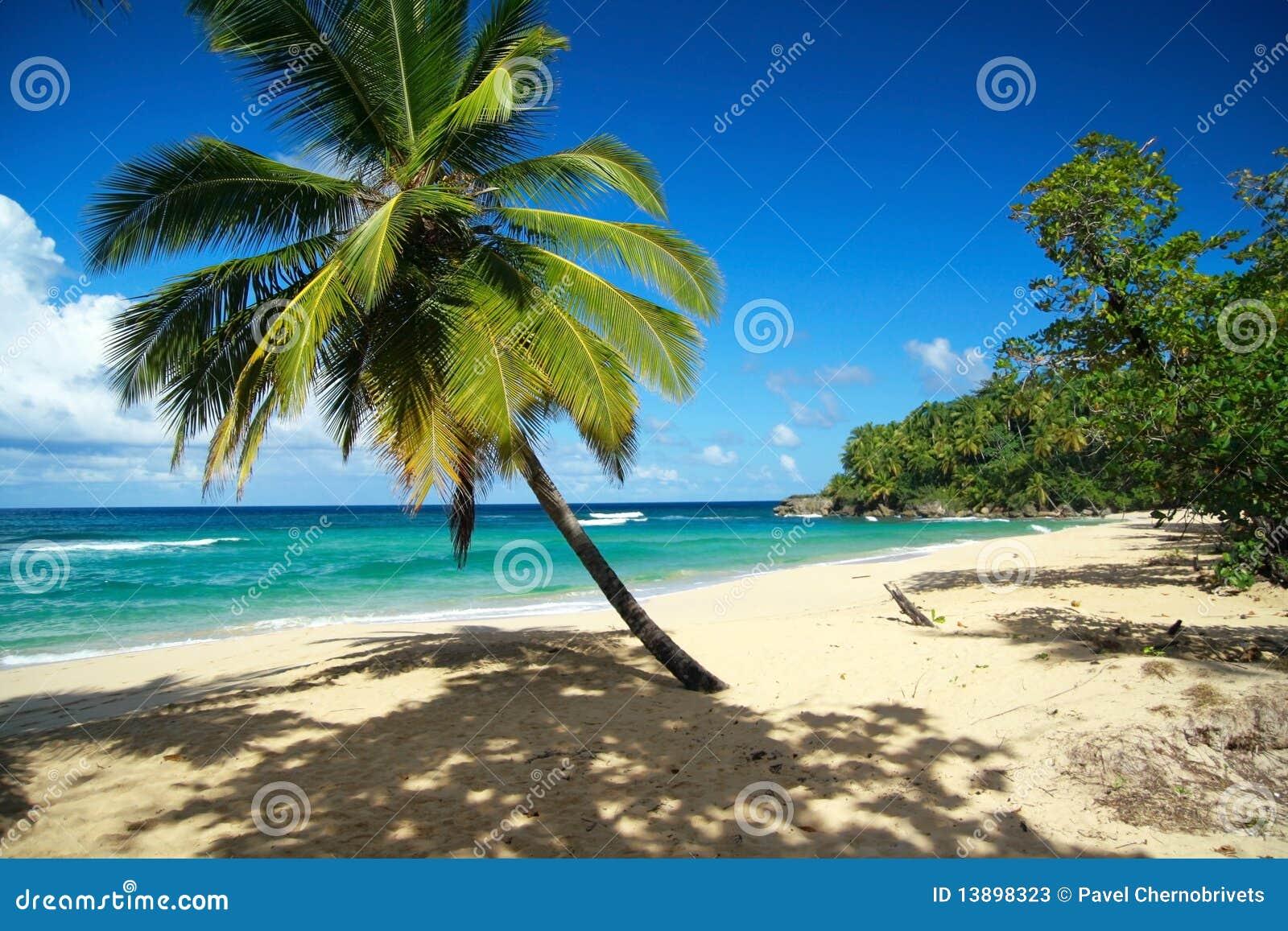 Ruhiger Strand mit Palme
