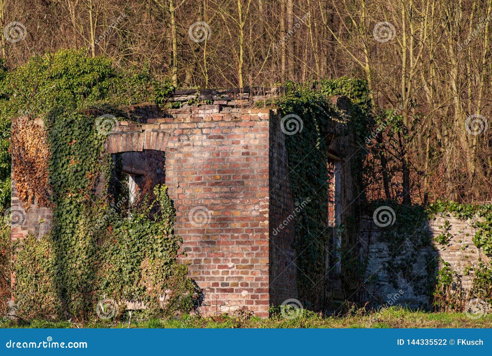 Ruina dom przerastający z bluszczem