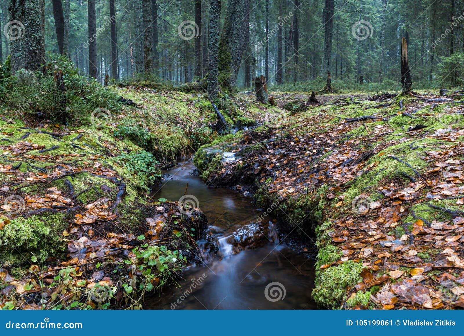 Ruisseau dans la forêt d automne
