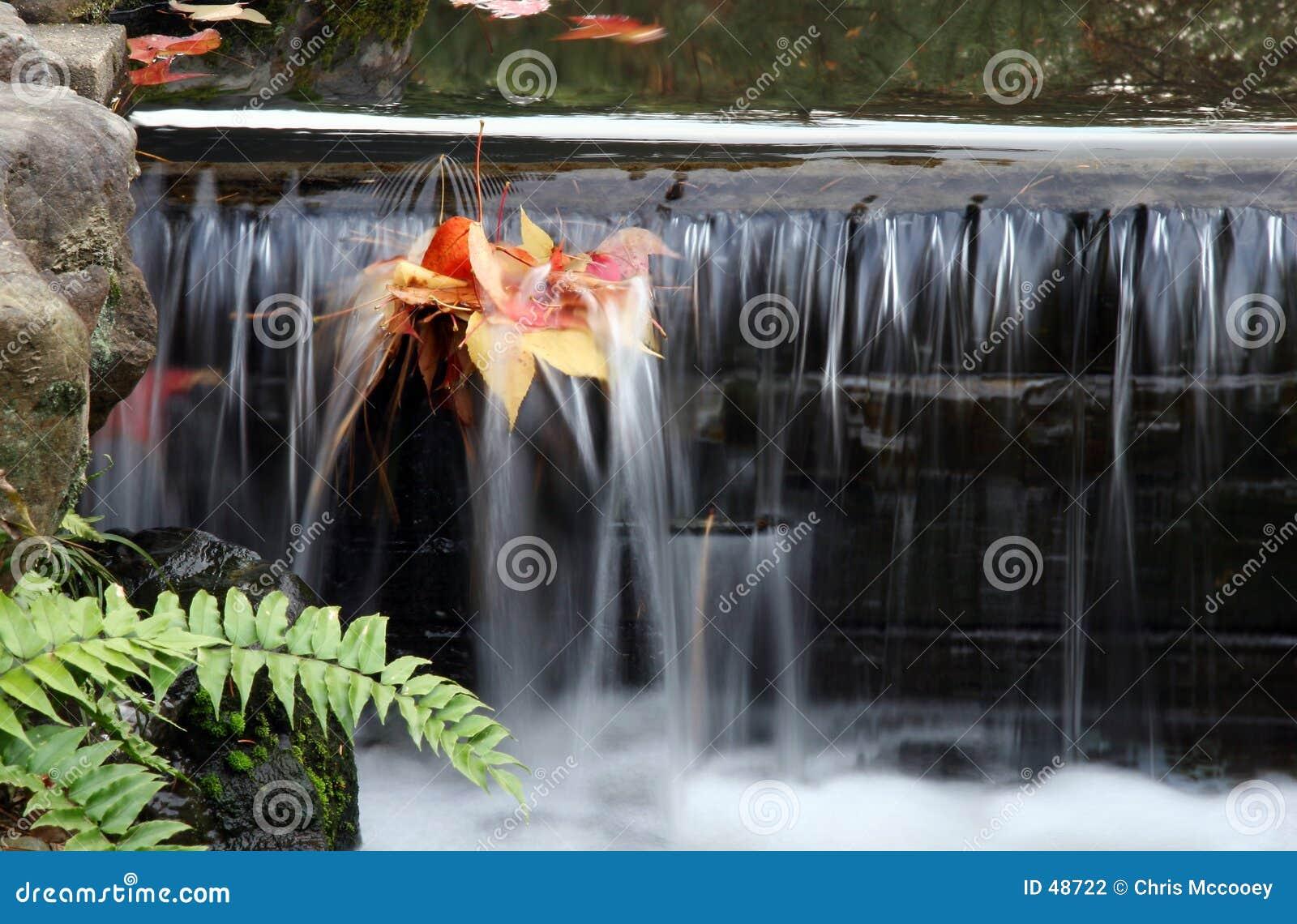 Ruisseau feuillu