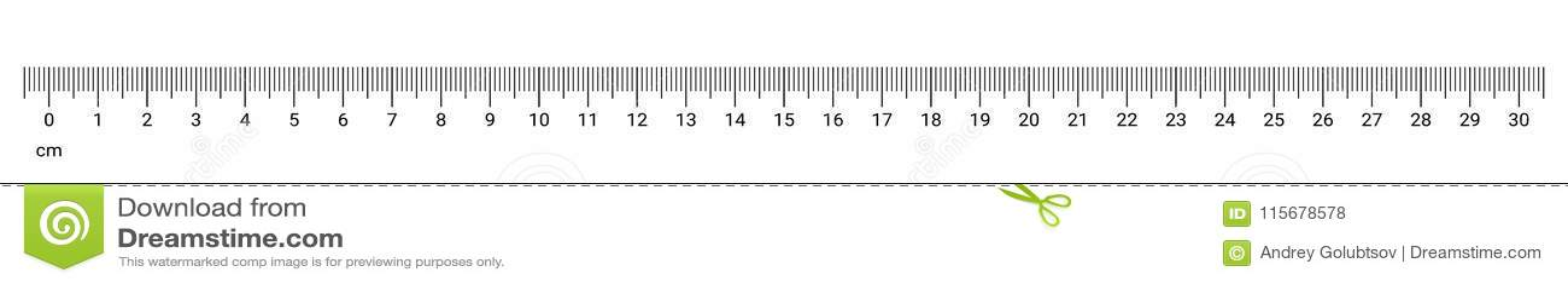 Ruler cm measurement numbers vector scale
