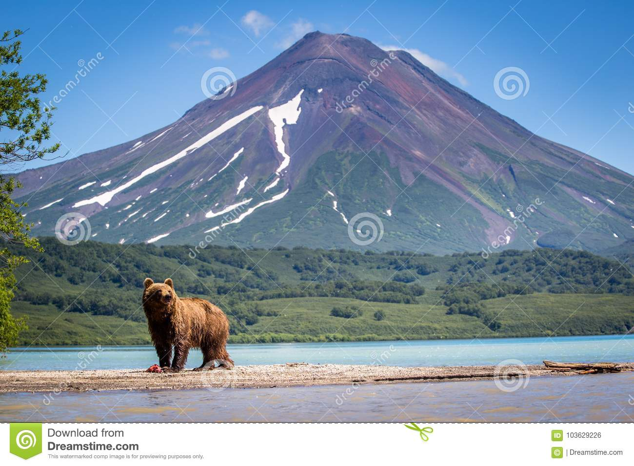 Ruling the landscape, brown bears of Kamchatka