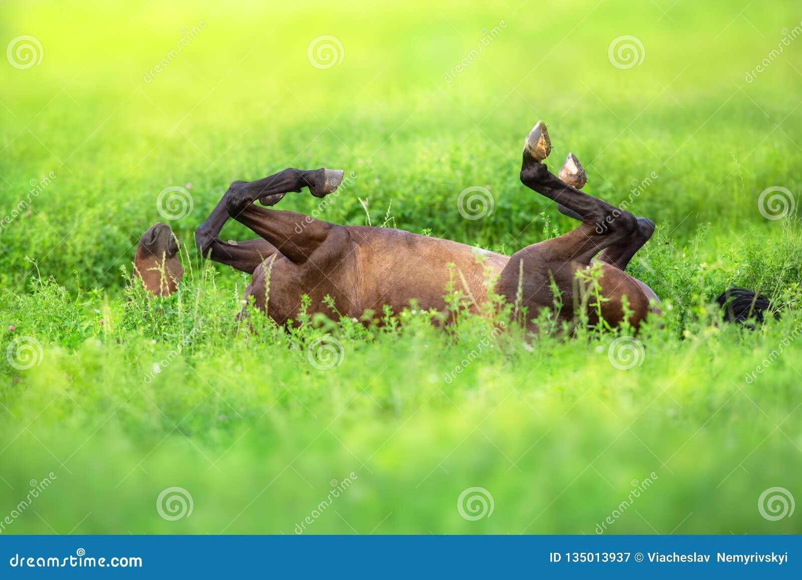 Rulle för fjärdhäst på tillbaka