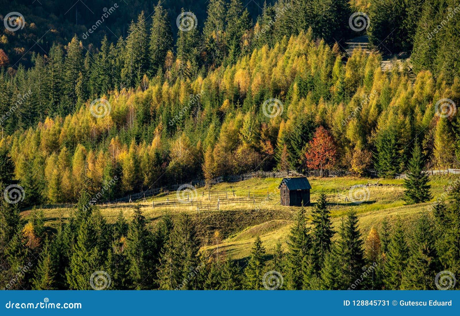 Rumänsk by på bygd med det gamla wood huset och pinjeskogen