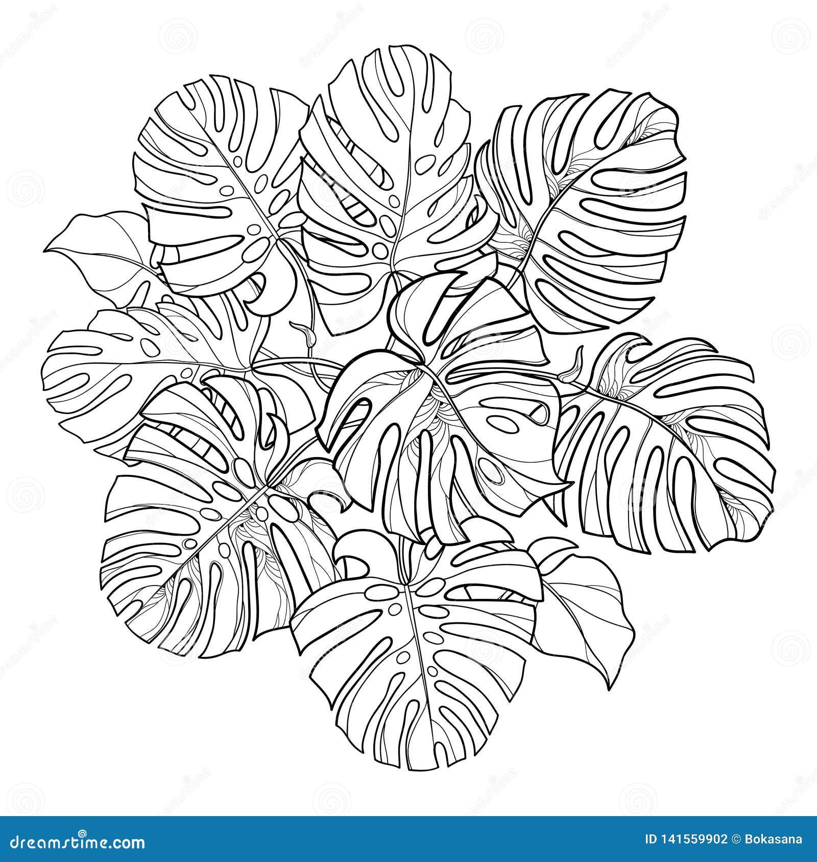 Rund bladgrupp för vektor med översikten tropiska Monstera eller för schweizisk ost växt i svart som isoleras på vit bakgrund
