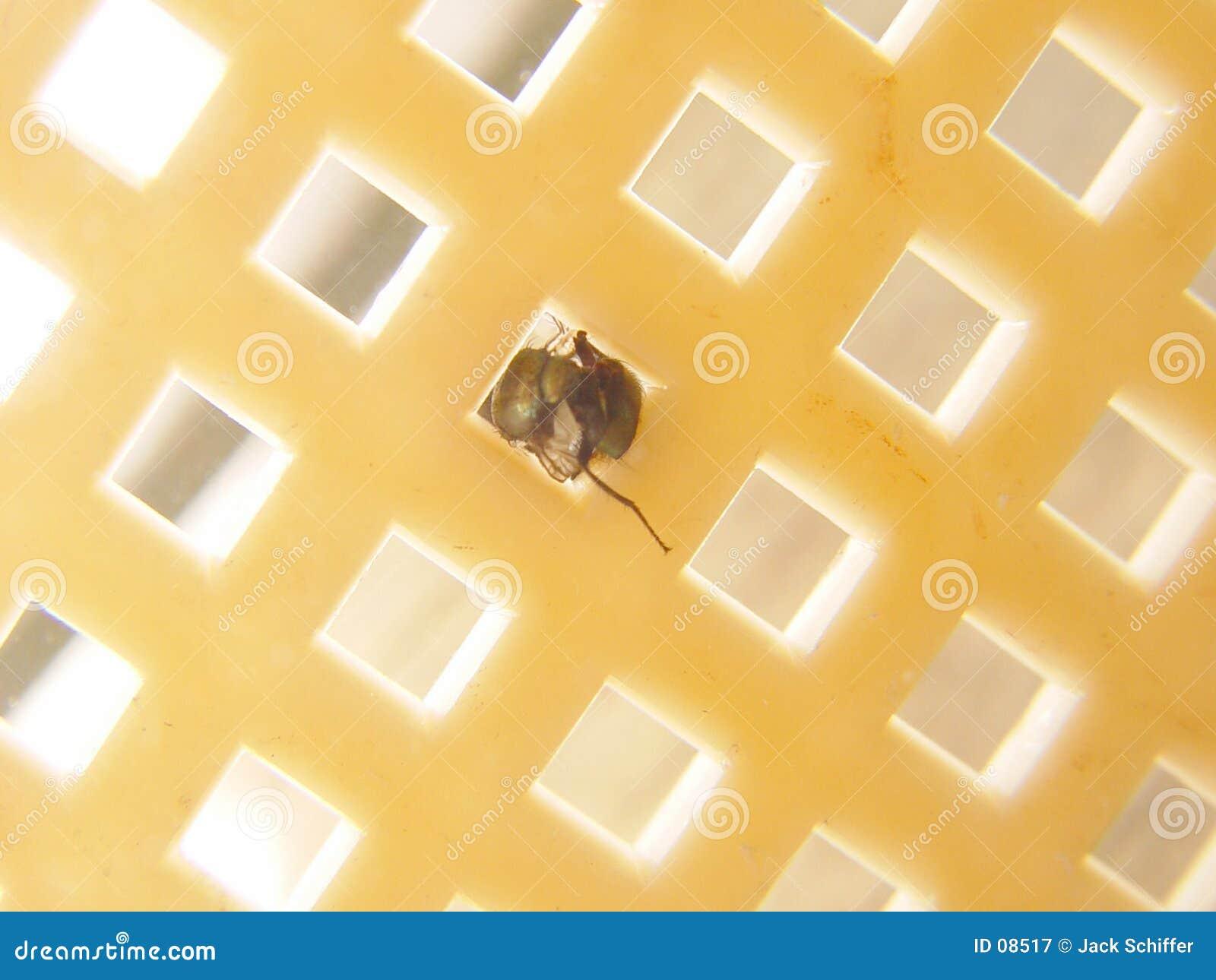 Runde Fliege in einem quadratischen Loch