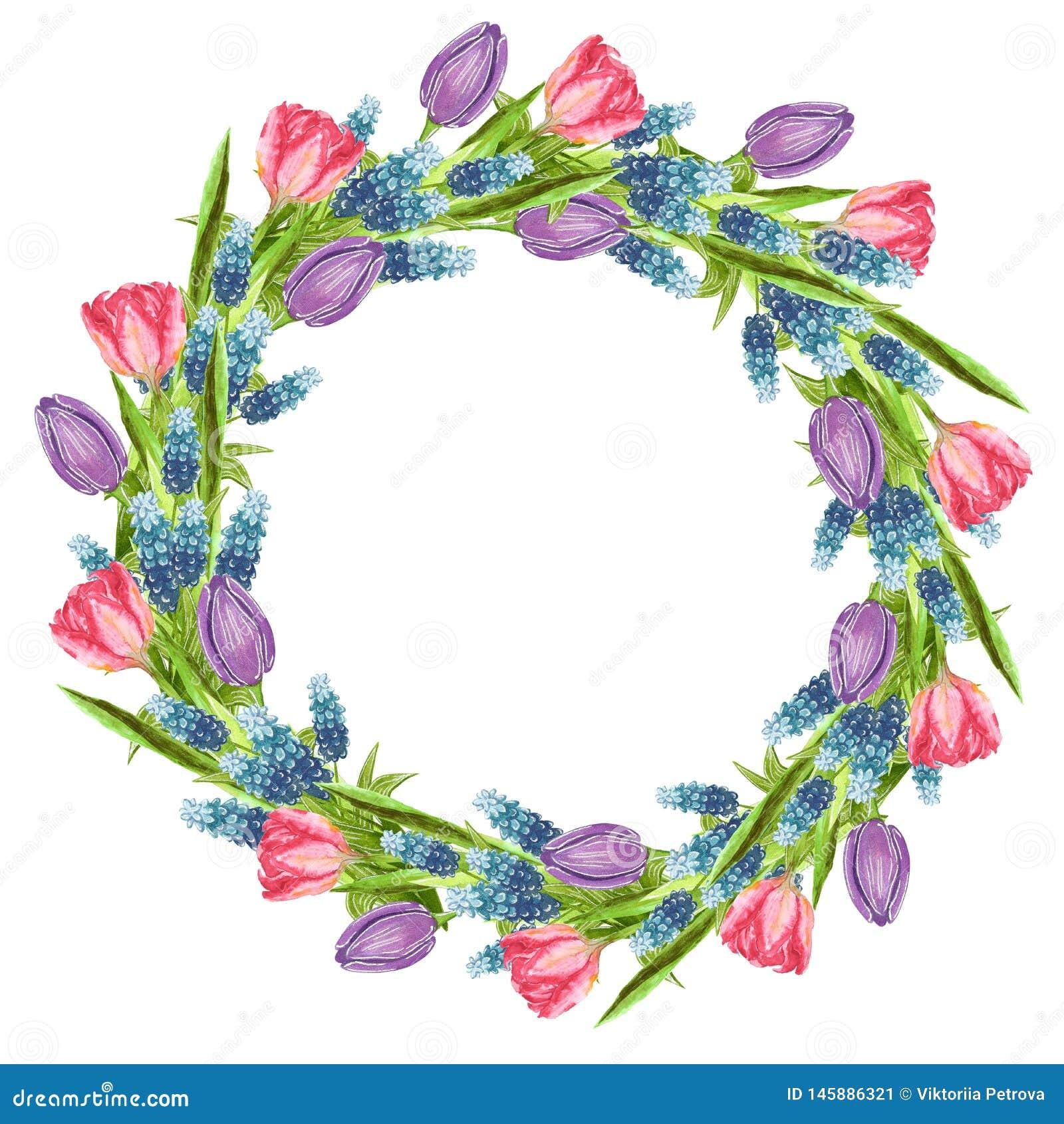 Runder geformter Kranz gemacht von den Blumen: Muscari, Rosa und purpurrote Tulpe