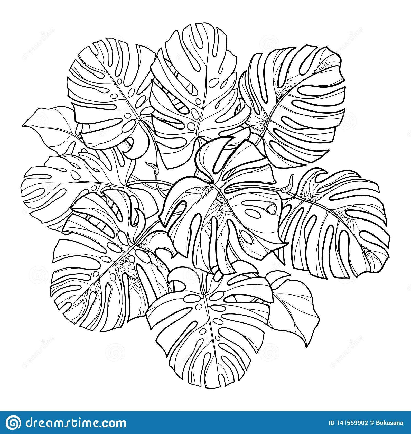 Rundes Blattbündel des Vektors mit Entwurf Anlage tropischen Monstera oder des Schweizer Käses in Schwarzem lokalisiert auf weiße