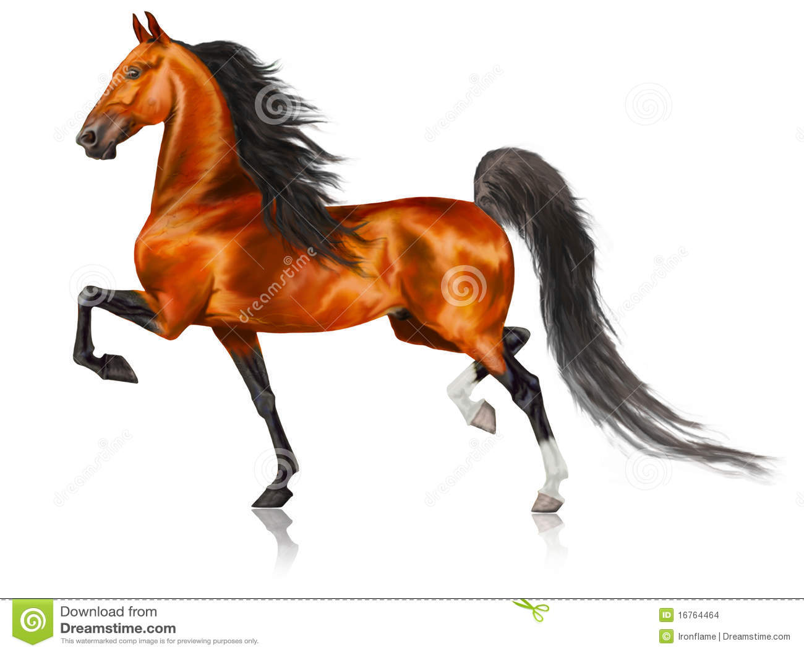 running american saddlebred horse stock images   image