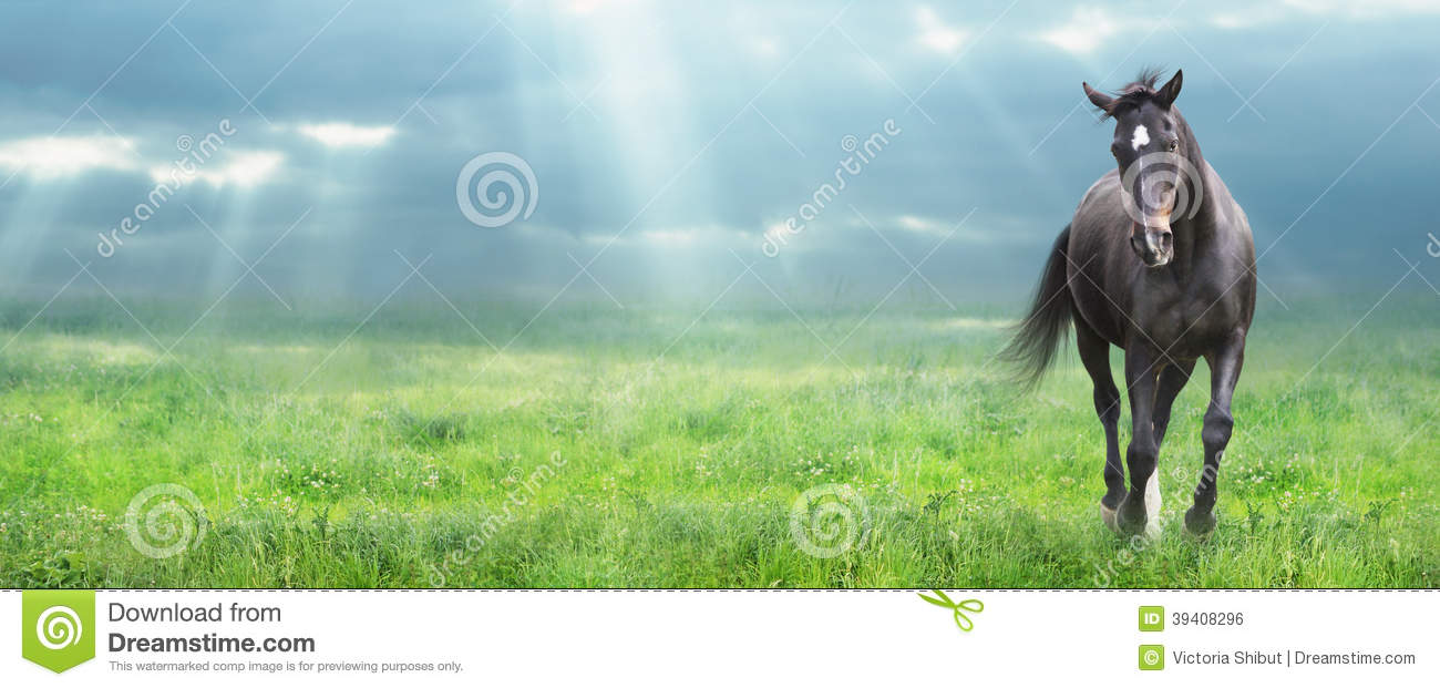 7 443 Running Black Horse Photos Free Royalty Free Stock Photos From Dreamstime