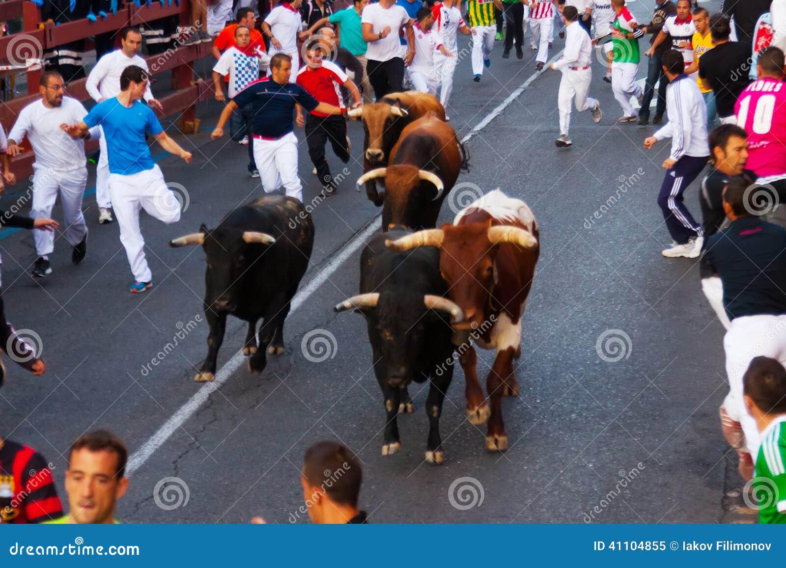 running of the bulls in san sebastian de los reyes editorial image image 41104855. Black Bedroom Furniture Sets. Home Design Ideas