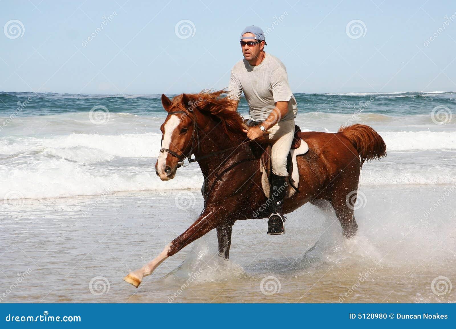 Running Horse at beach stock photo. Image of wild, racing ...