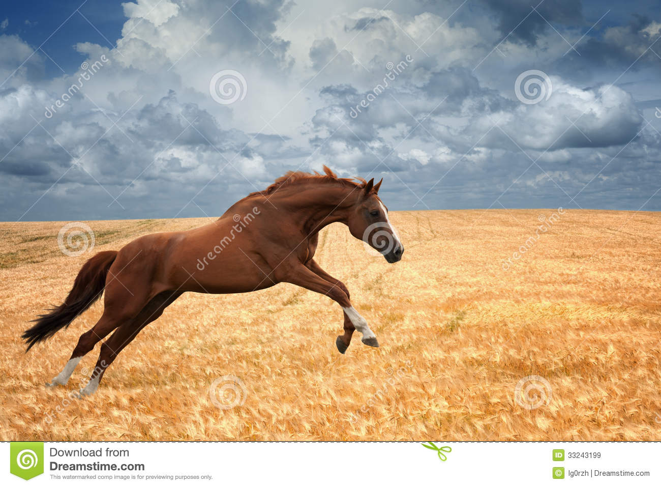 running horse royalty free stock images - image: 33243199