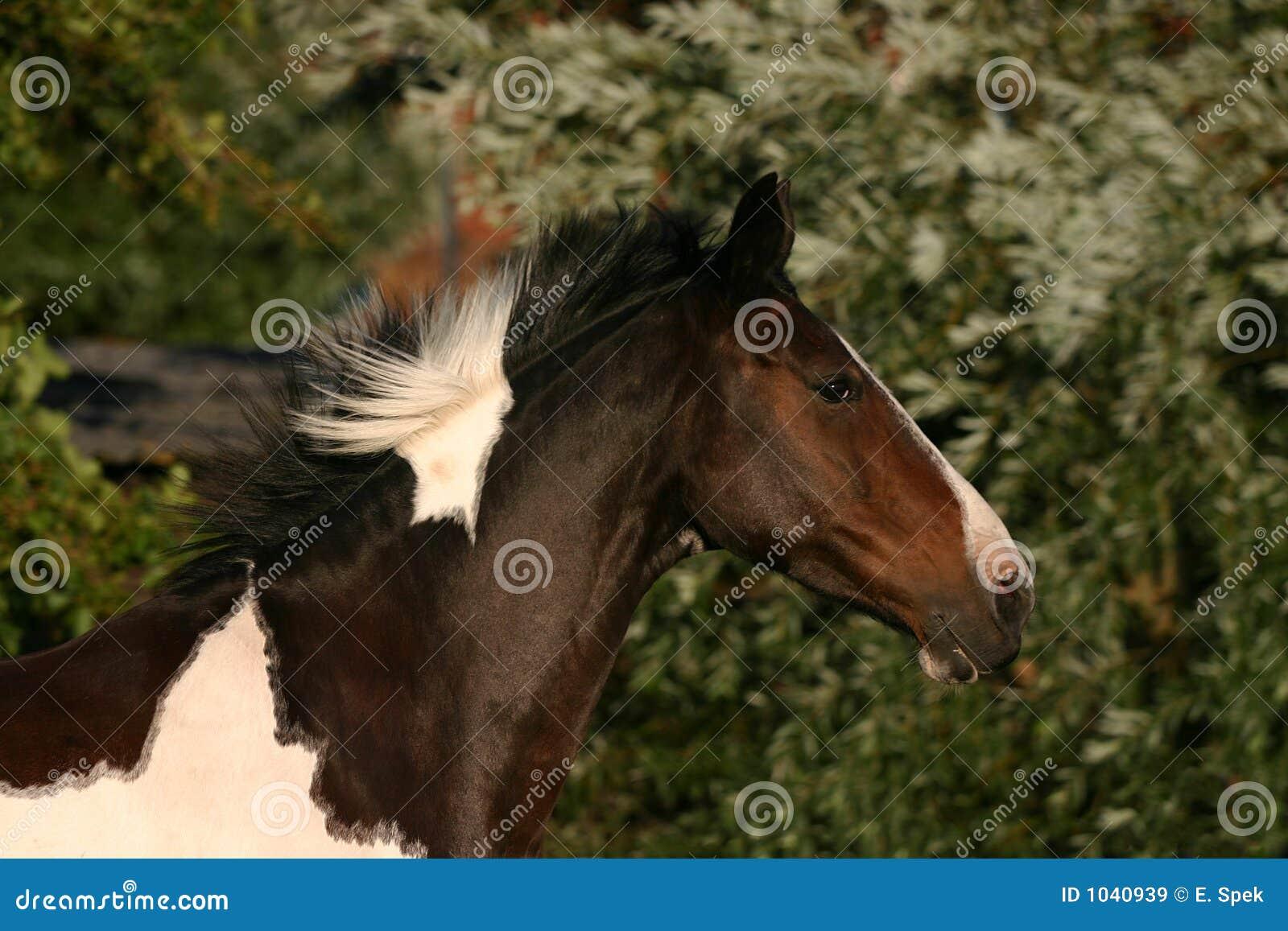 Running horse head