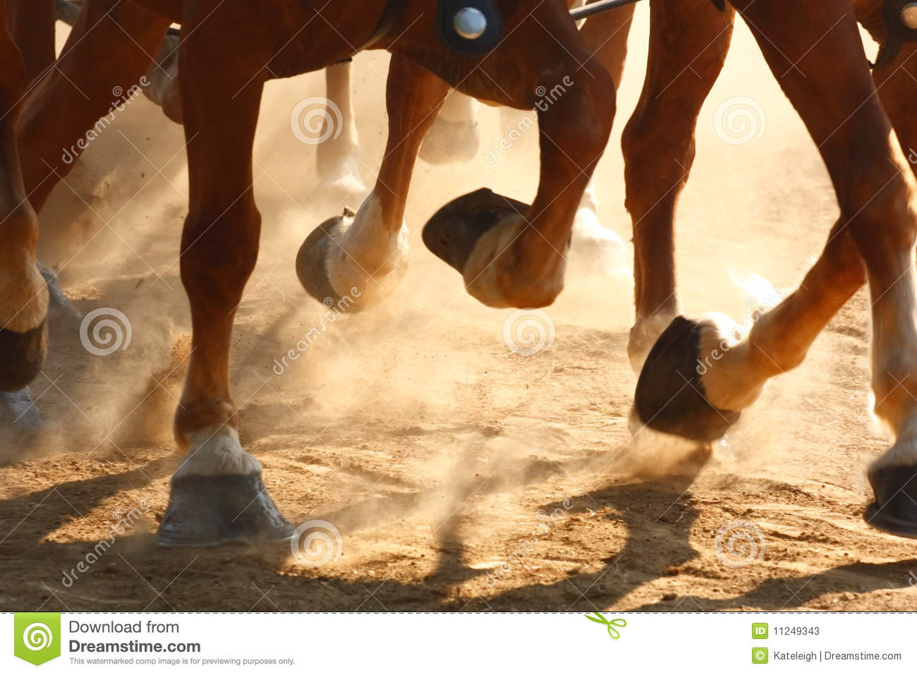Running Horse Hooves Stock Photos - Image: 11249343