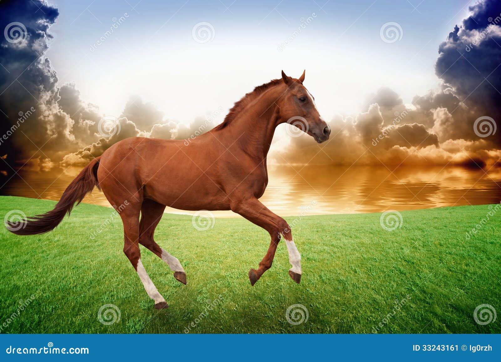Running Horse Sunset Stock Image Image Of Cloud Grass 33243161