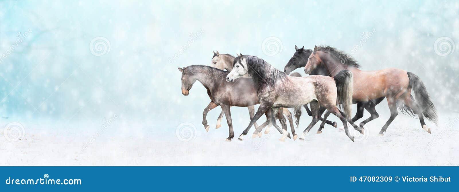 Running horses herd, in snow, winter banner