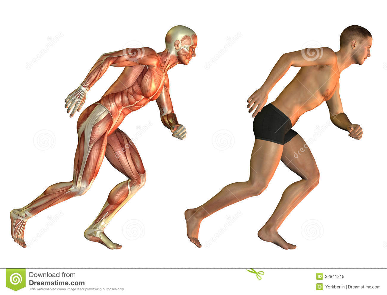 Running man anatomy study stock illustration. Illustration of legs ...