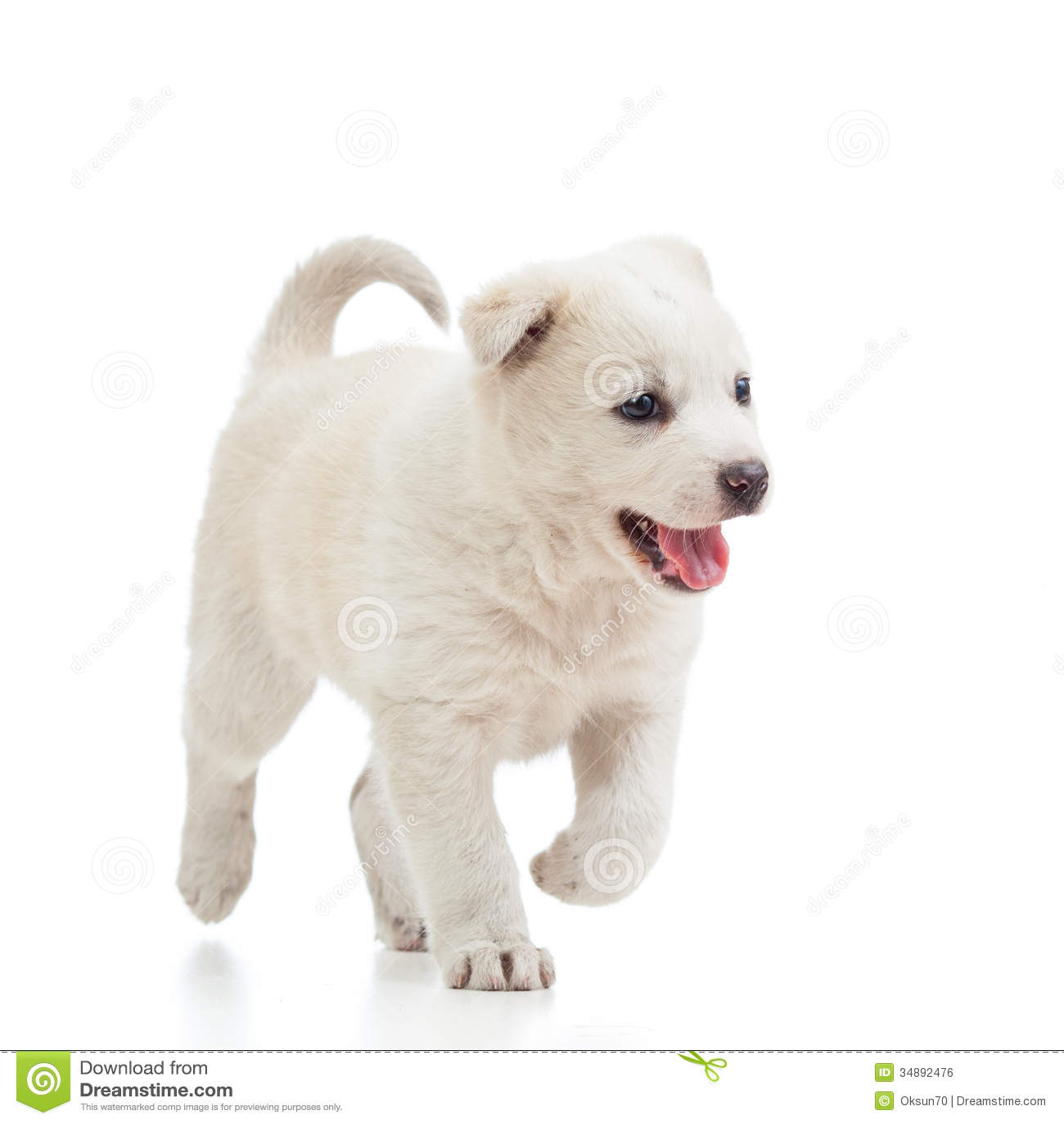 Running Puppy Dog Stock Photo Image Of Home Intelligent 34892476