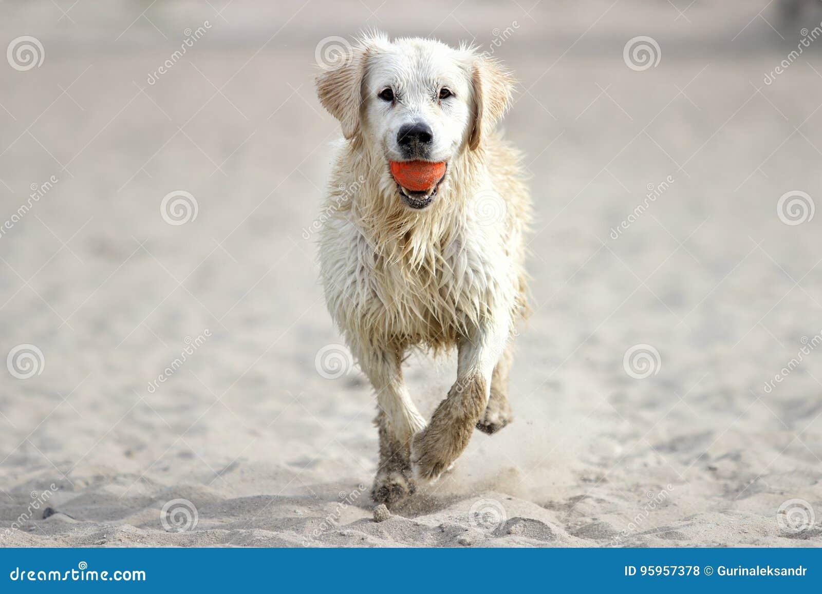 Running sand för hund