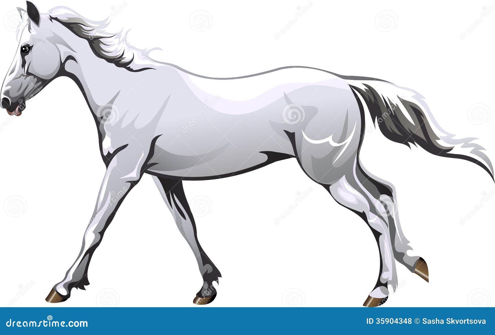 Running White Horse Stock Vector Illustration Of Horse 35904348