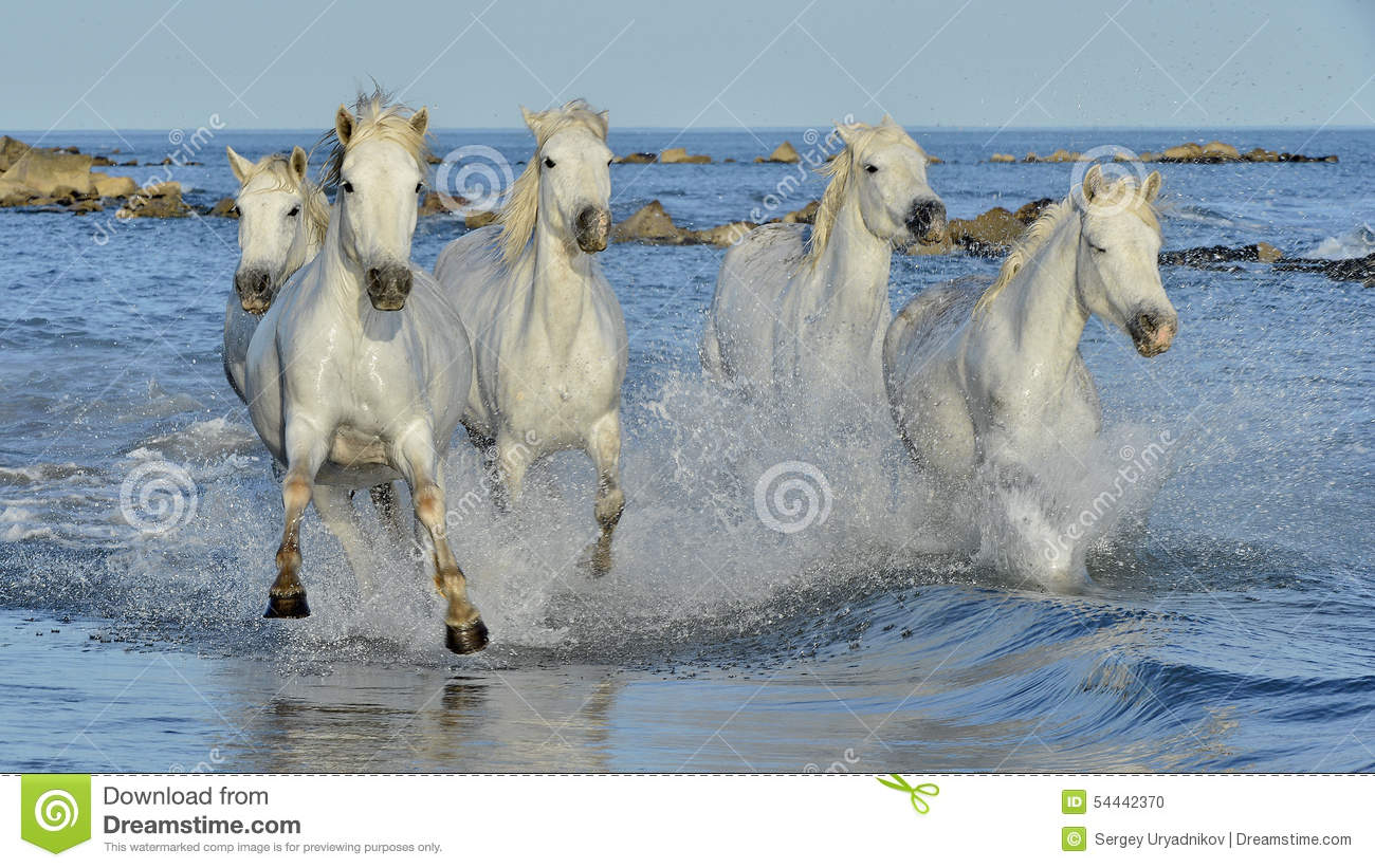 wild horses running in water hot girls wallpaper. Black Bedroom Furniture Sets. Home Design Ideas