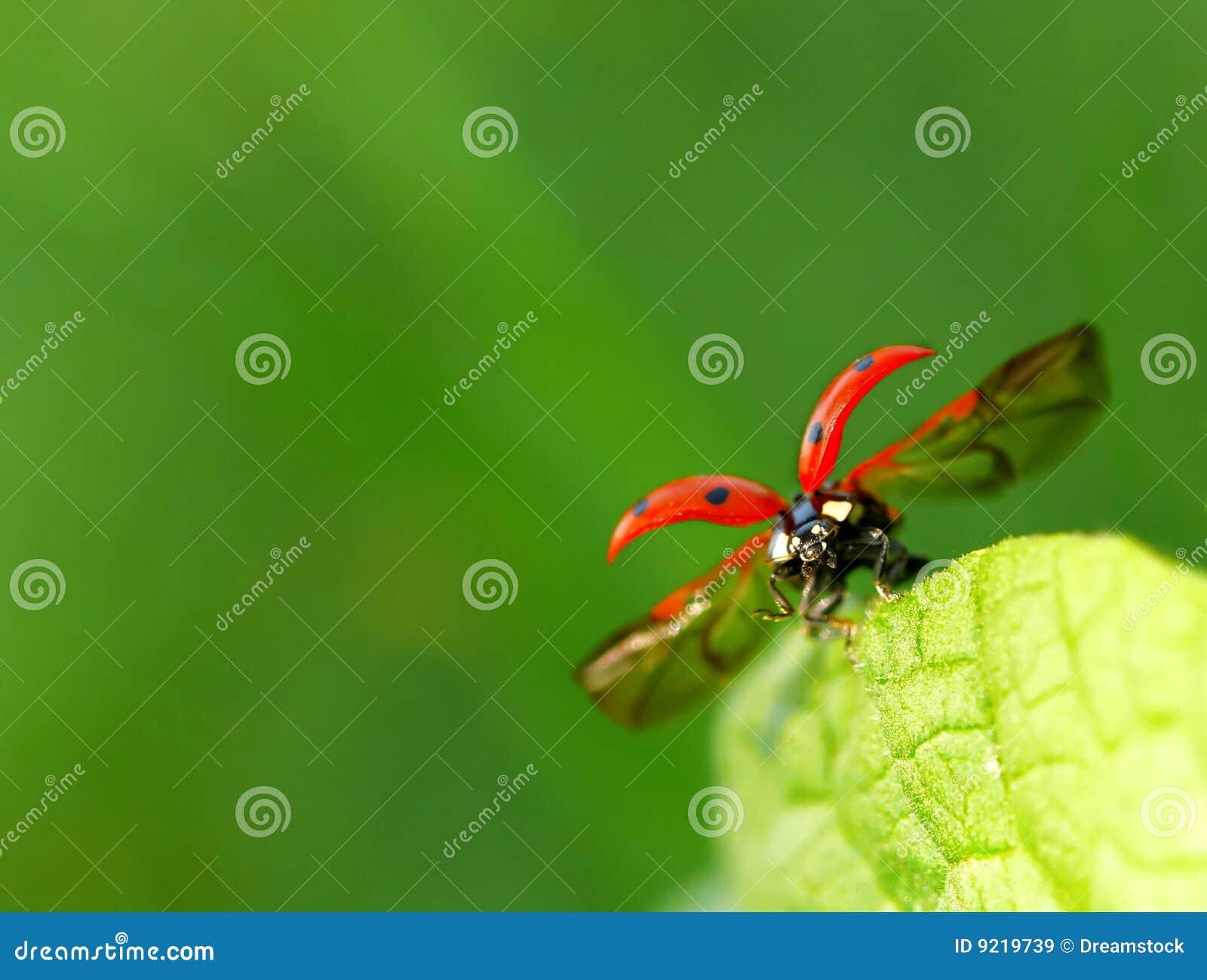 Runway ladybug