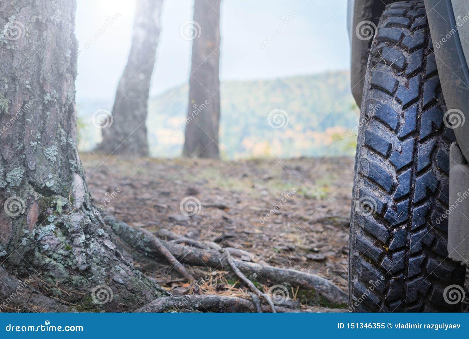 Ruota di automobile del camion sulla traccia fuori strada di avventura della foresta
