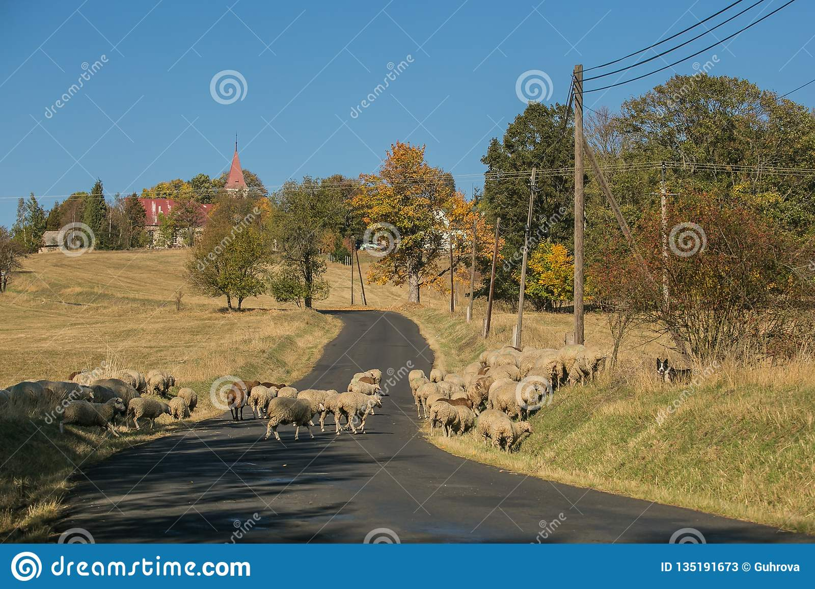 Rural autumn landscape and a herd of sheep crossing road