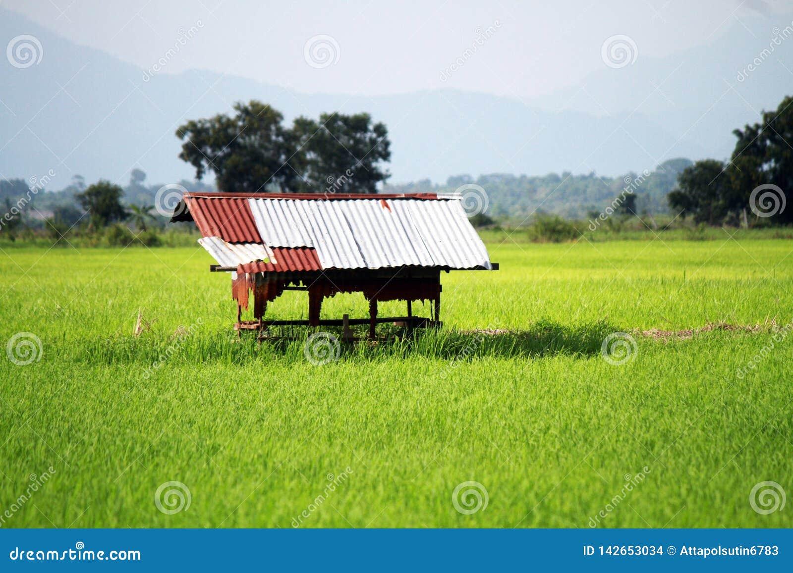 Rural con los pequeños fondos de las montañas de la cabaña
