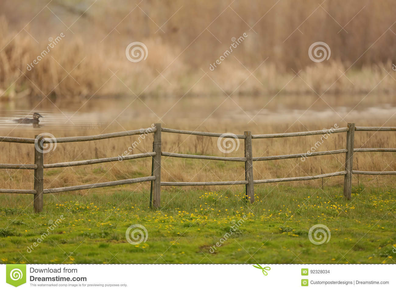 A rural country scene with a wooden fence, green grass, yellow wildflowers, a duck swimming and a blurred background.