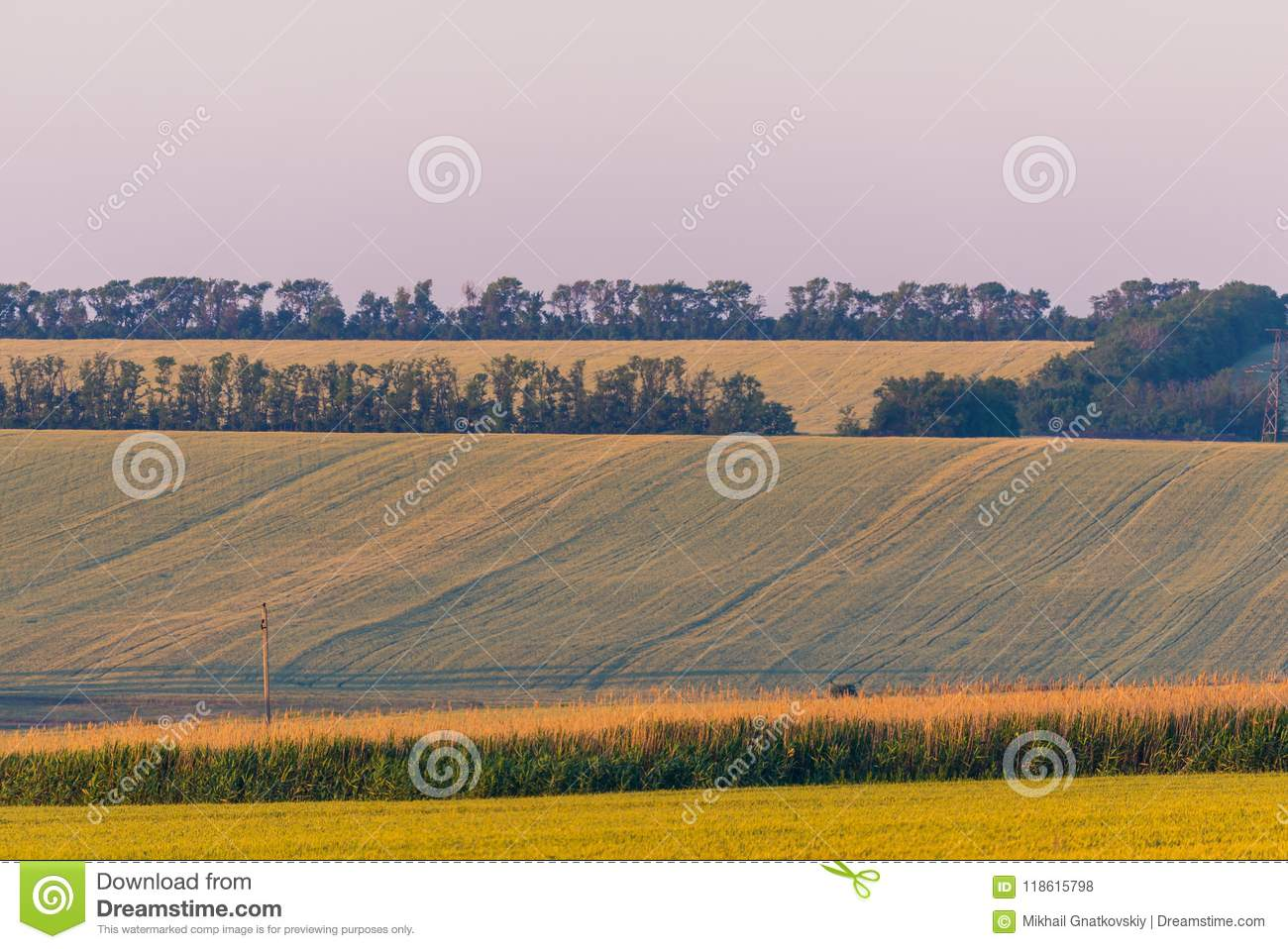 Rural field sunset summer landscape