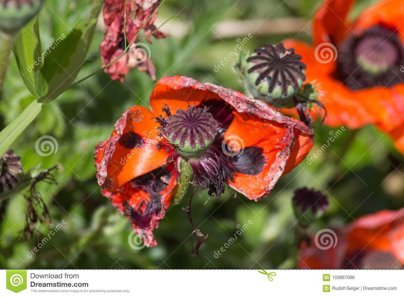 Rural Flowers In Cottage Garden Stock Photo - Image of ...