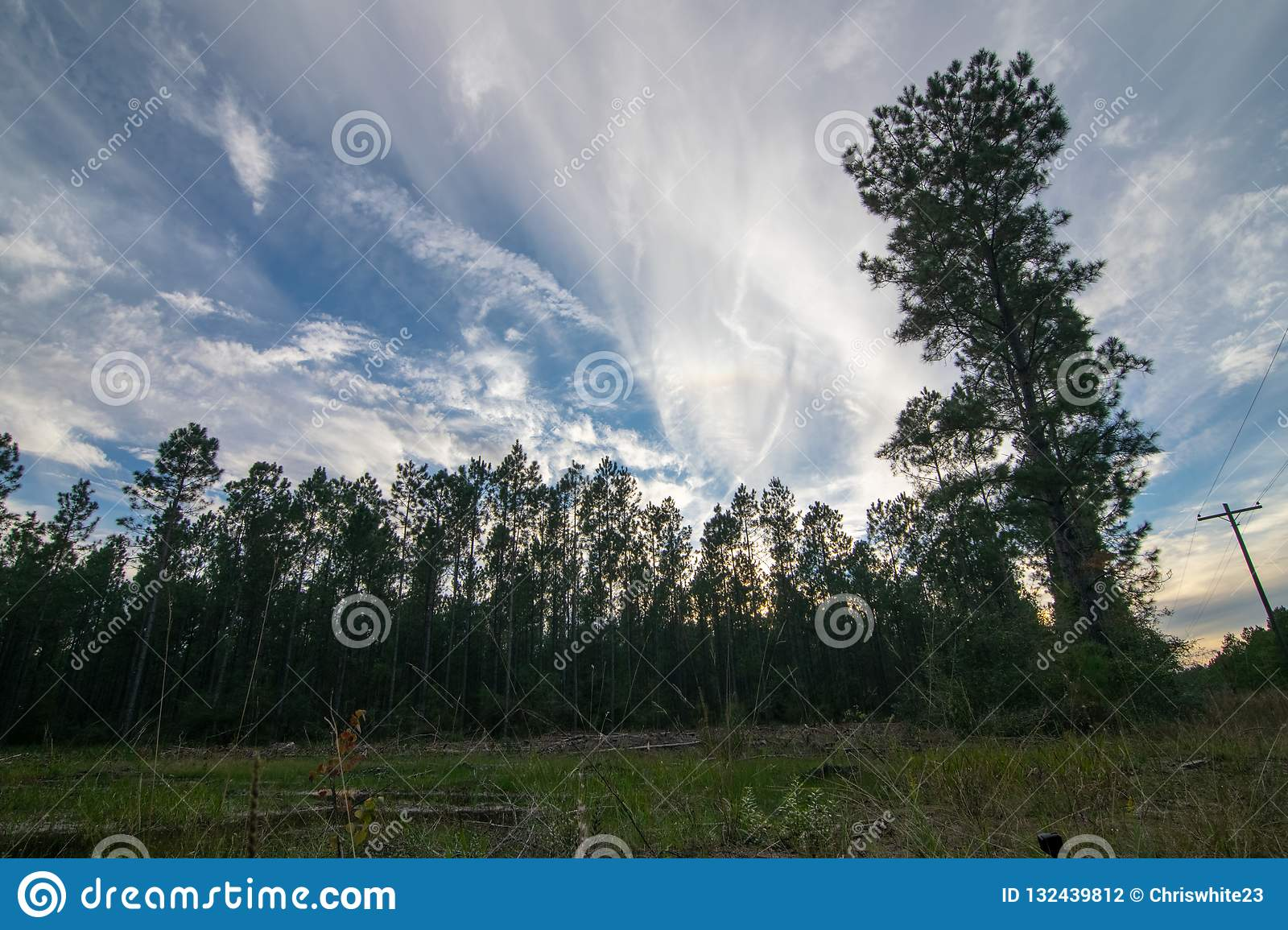 Rural forest afternoon sky near sunset