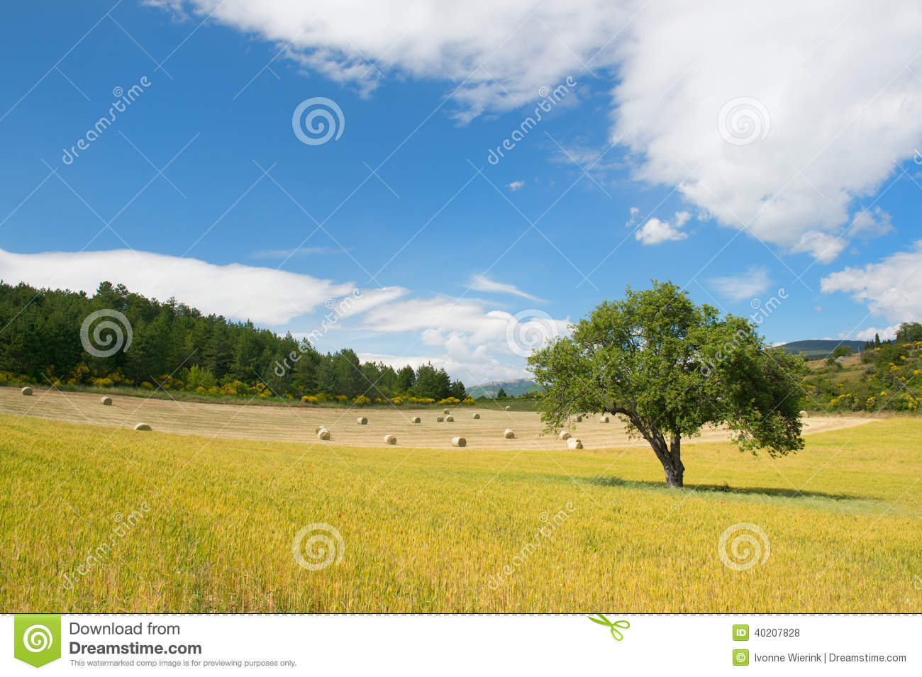 Rural french landscape stock photo image 40207828 for Rural landscape design