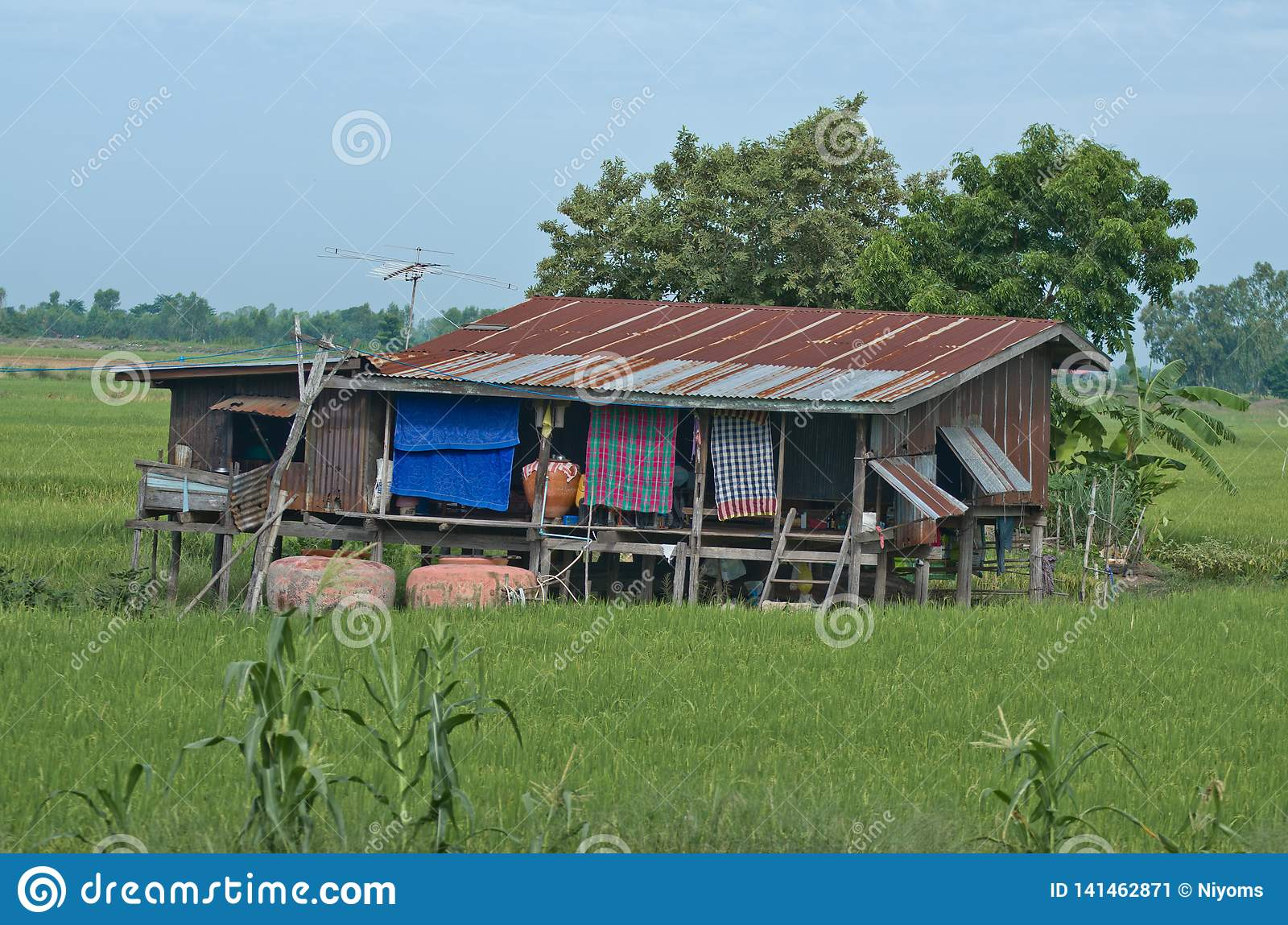 Rural house in rice field in Thailand