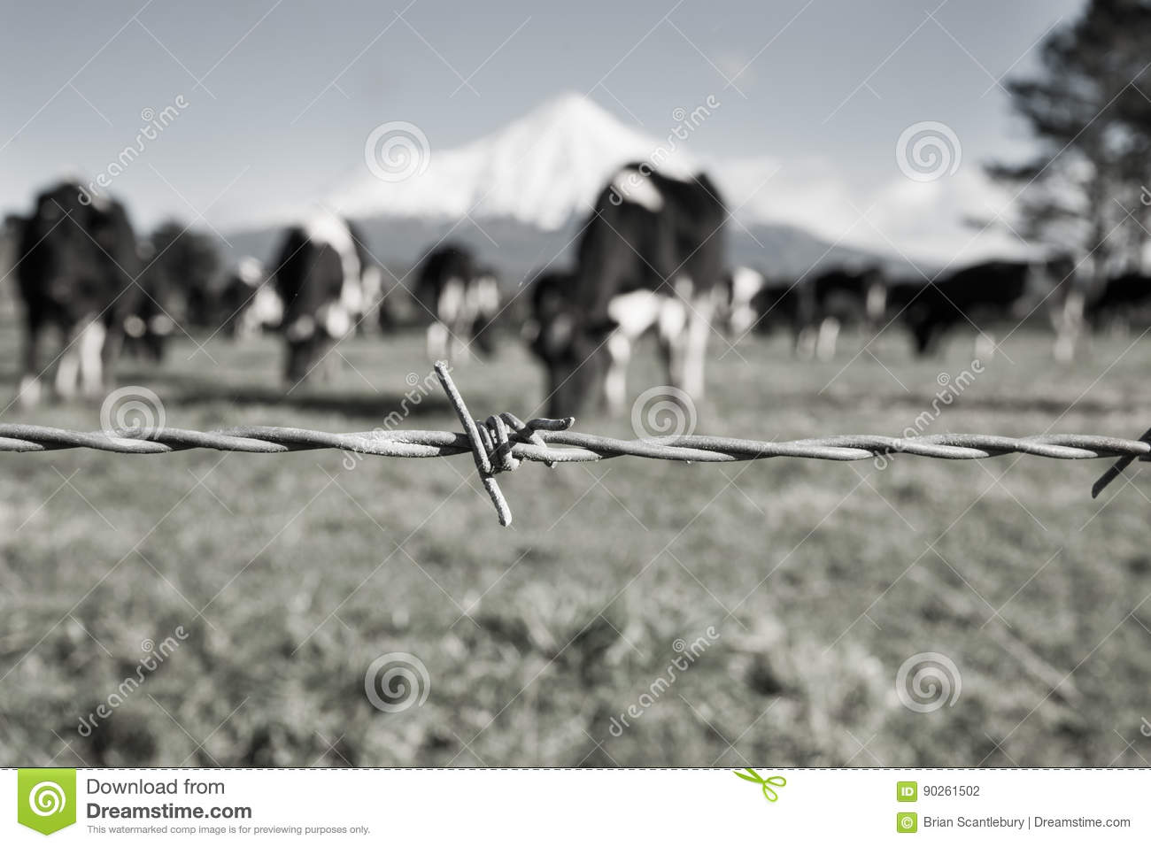 Rural Image Barbed Wire Fence Strand With Blurred Black And Whit ...
