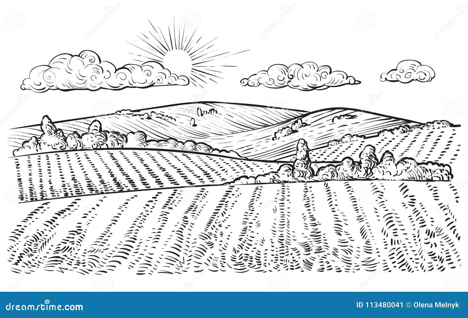 Rural Landscape, Vector Vintage Hand Drawn Illustration. Stock ...