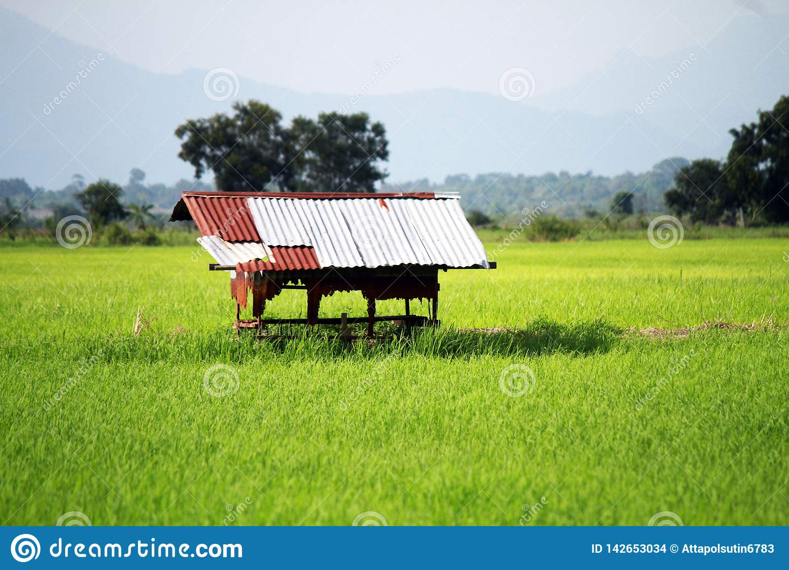 Rural with small cottage Mountains backgrounds.