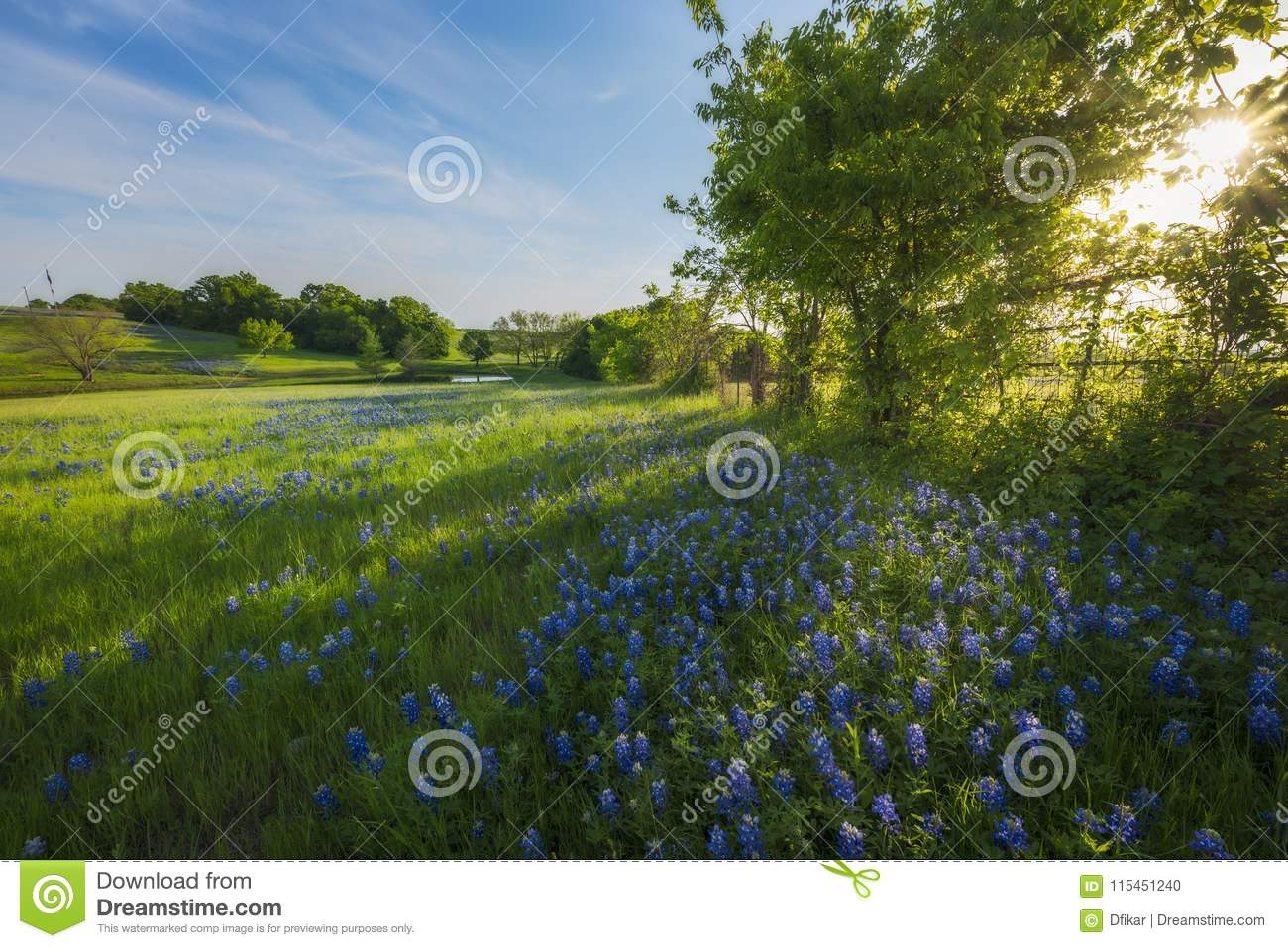 Rural Texas Spring Flowers Reflecting On A Pond Stock Photo Image