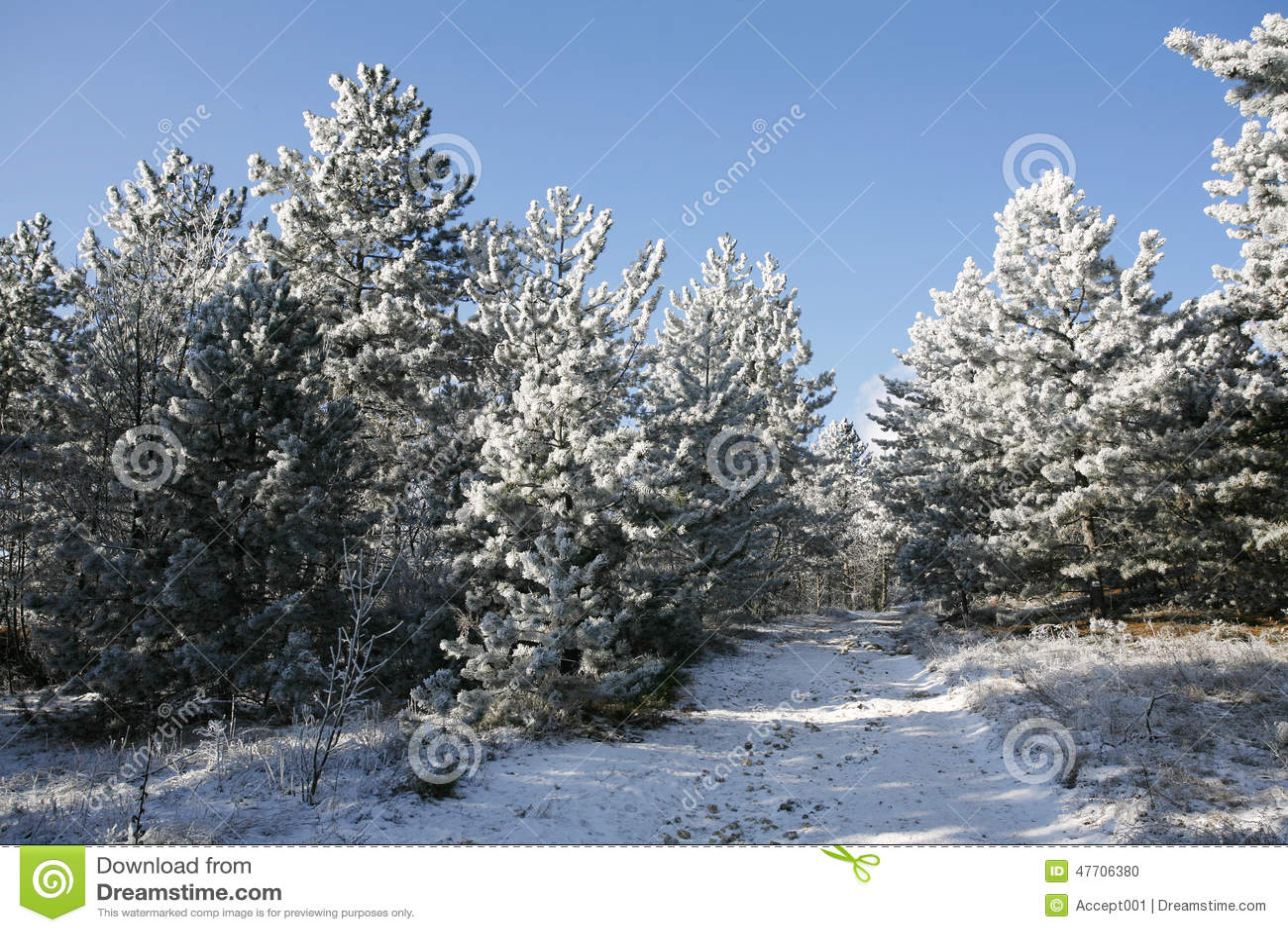 Rusa vinterpinjeskogslingan