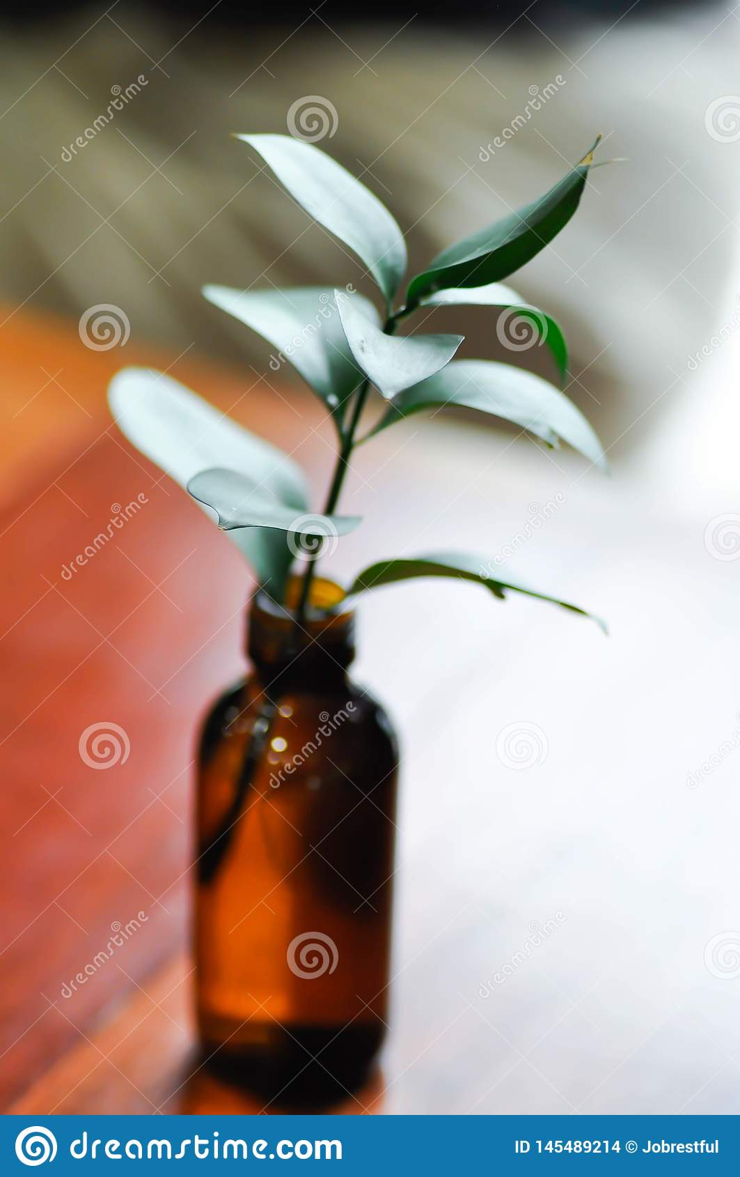 Ruscus israélien, feuille de vert de Ruscus de sraeli
