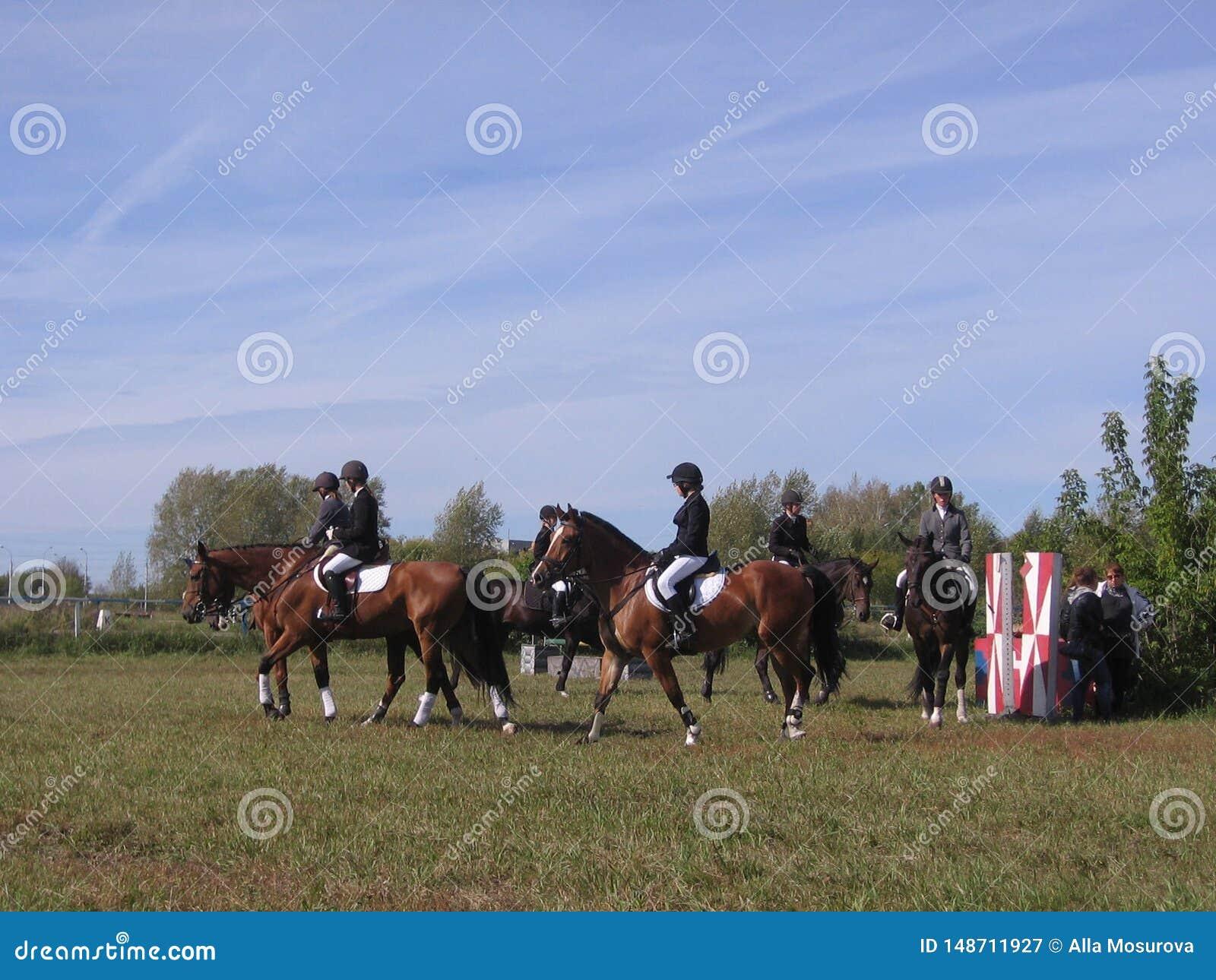 Rusland Novosibirsk 14 September, 2013 paarden van de de Renbaanconcurrentie van Novosibirsk in toont het springen en de eventing