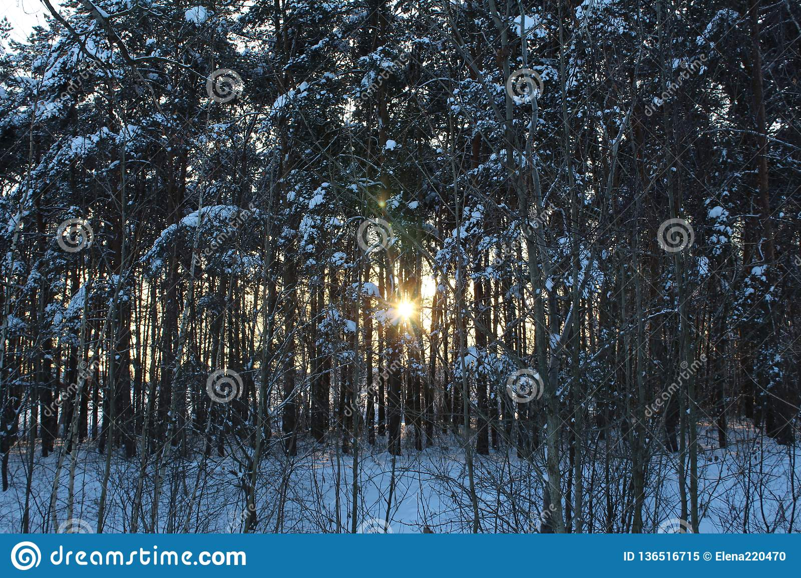Landscape Of Winter Snow-covered Forest  Stock Image - Image of snow