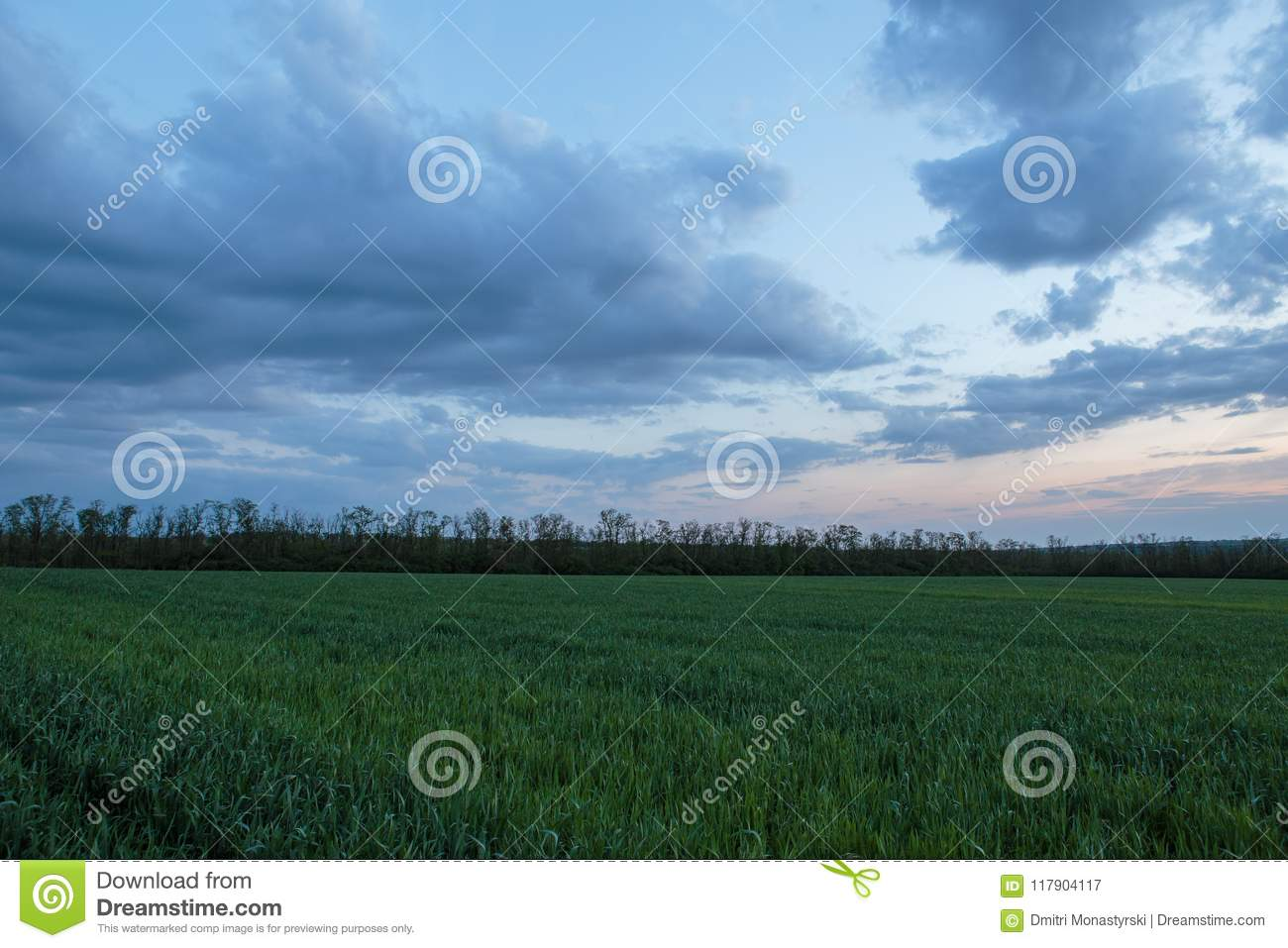 The movement of the thunderclouds over the fields of winter wheat in early spring in the vast steppes of the Don.