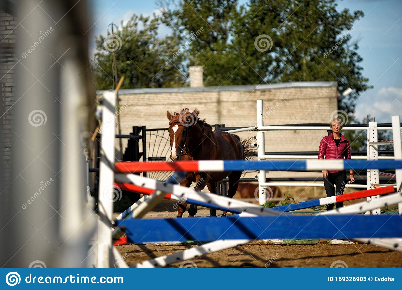 Brown Horse Jumps Over Obstacles In Training Editorial Stock Photo Image Of Event Habitat 169326903