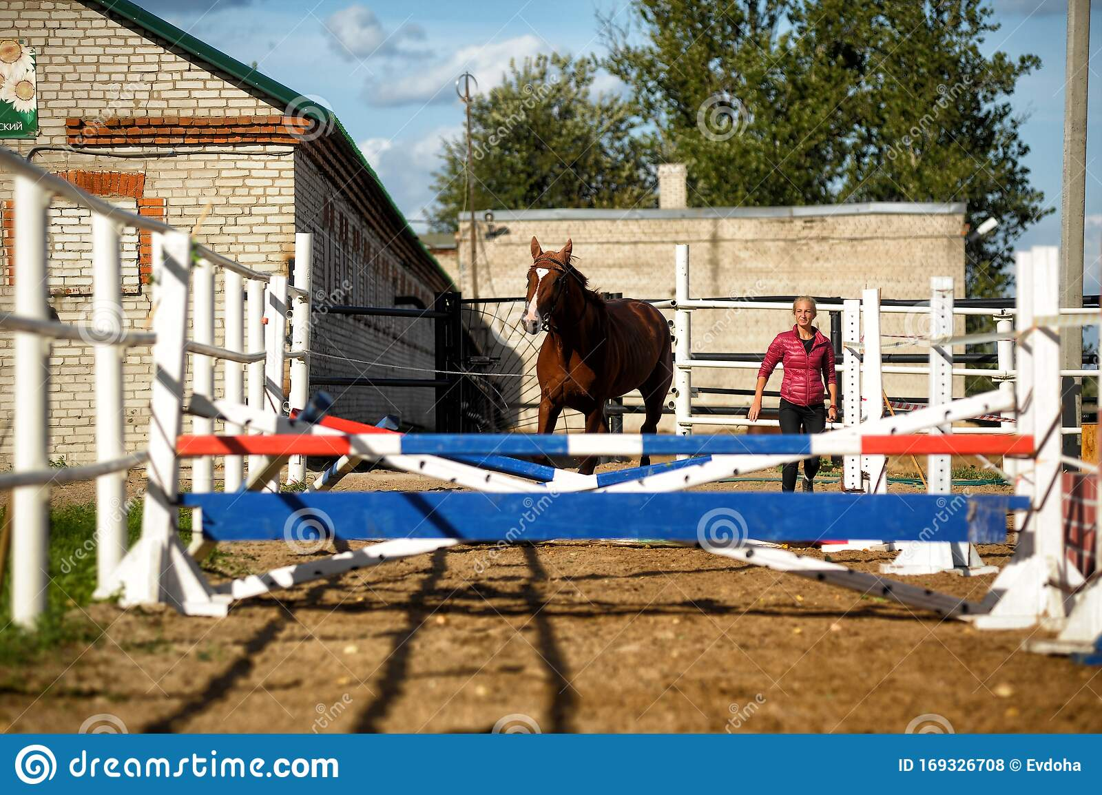 Brown Horse Jumps Over Obstacles In Training Editorial Stock Photo Image Of Habitat Leather 169326708