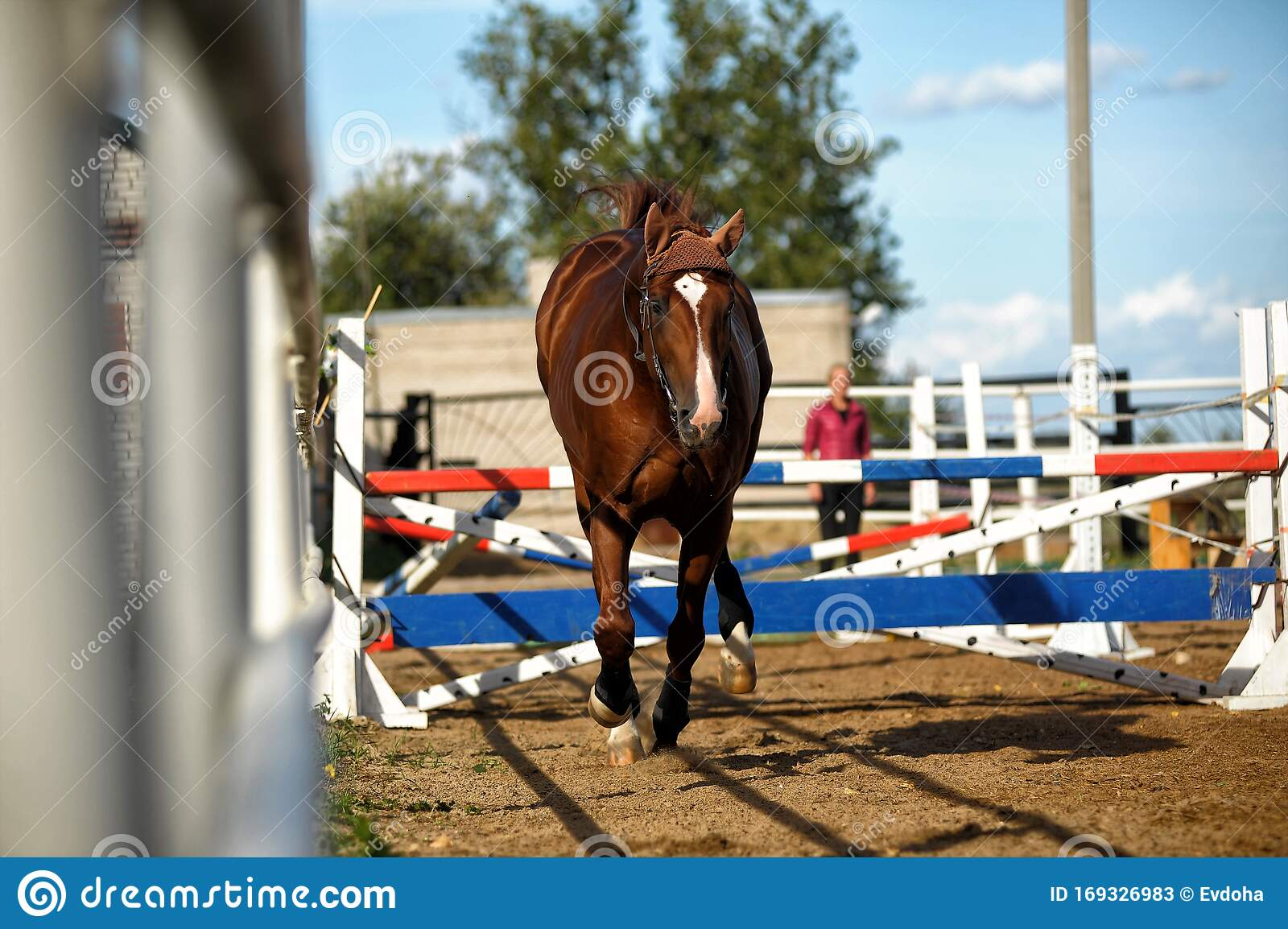 Brown Horse Jumps Over Obstacles In Training Editorial Stock Photo Image Of Farm Market 169326983