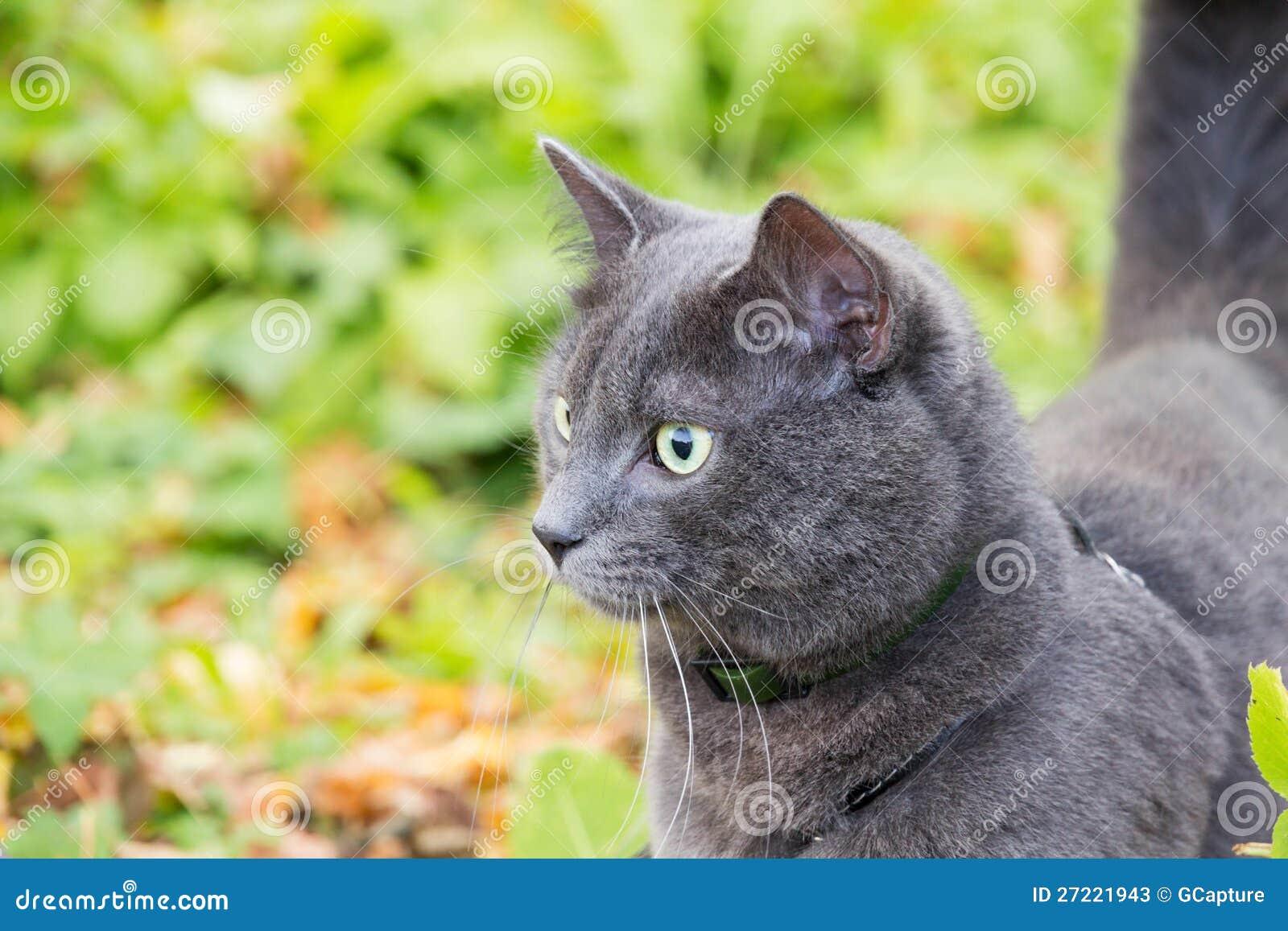 fus ro nyan cat