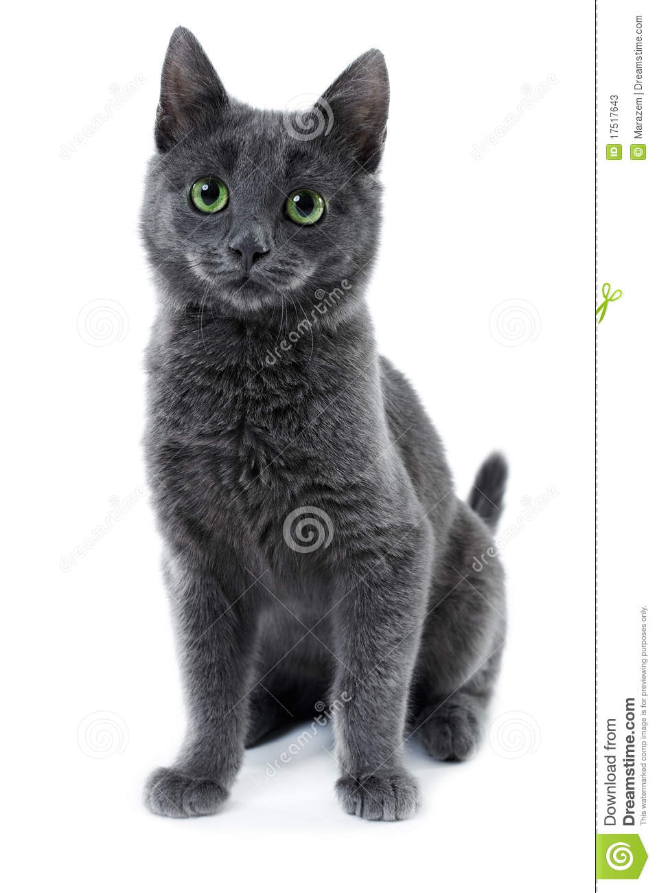 Russian Blue Kitten Stock Photos - Image: 17517643 White Kitten With Blue And Green Eyes